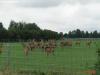 hodowla-dzikiej-zwierzyny