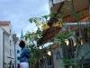 ryga-trujace-kwiaty